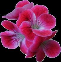 Fleur (7)
