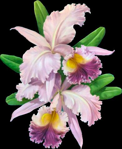 Orchidée (29)
