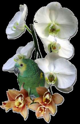 Orchidée (34)