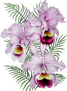 Orchidée (6)