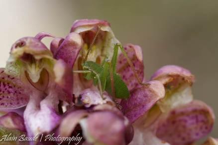 Orchidées des collines (5)