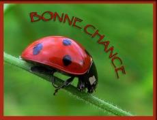 Gif Bonne Chance (6)