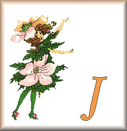 Gif Alphabet Fleurs 010 (10)