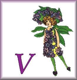 Gif Alphabet Fleurs 010 (22)